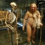 Difference Between Neanderthals and Humans