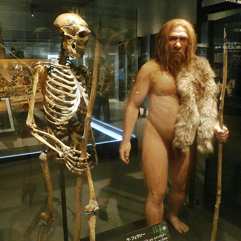 Neanderthals vs Humans