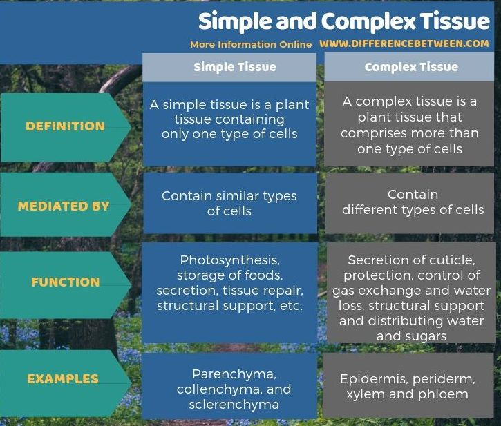 Difference Between Simple and Complex Tissue - Tabular Form