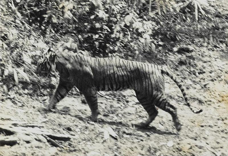 Endangered vs Extinct