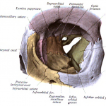 Difference Between Fissure and Fistula