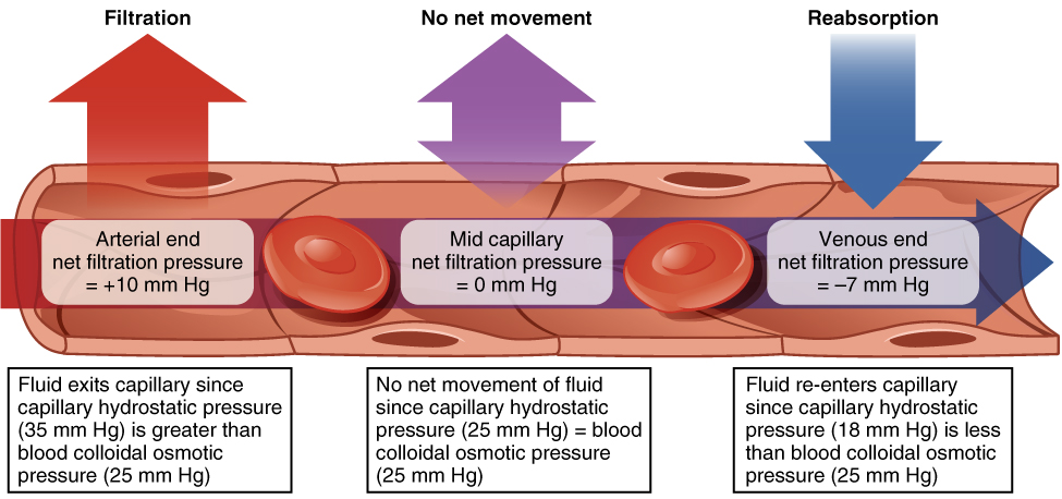 Difference Between Osmotic pressure and Oncotic pressure