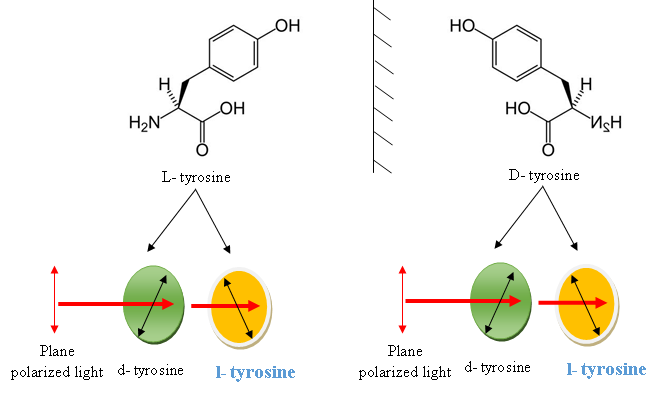 difference between l-tyrosine and tyrosine