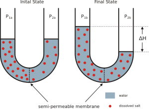 osmosis vs oncotic pressure