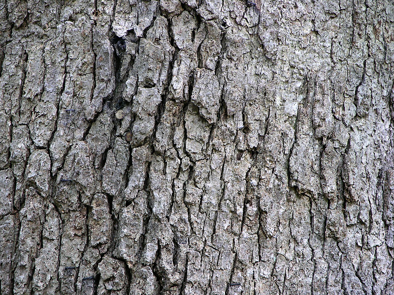 Key Difference Between Cork and Bark