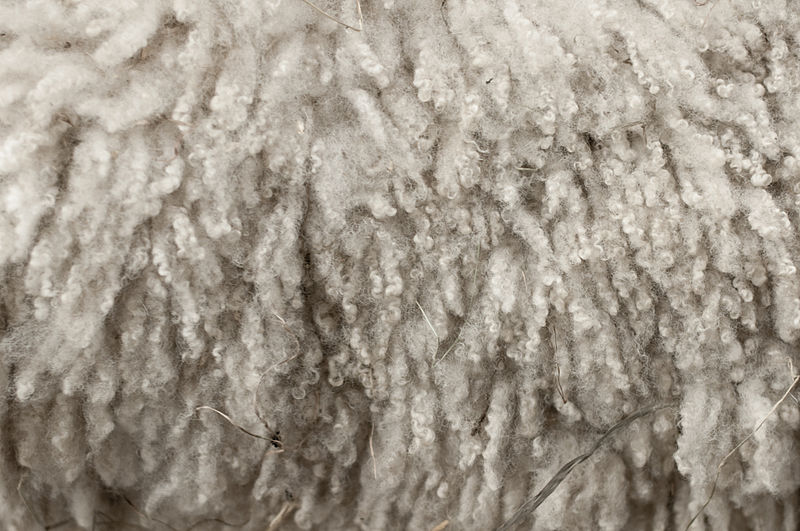Key Difference - Cotton vs Wool