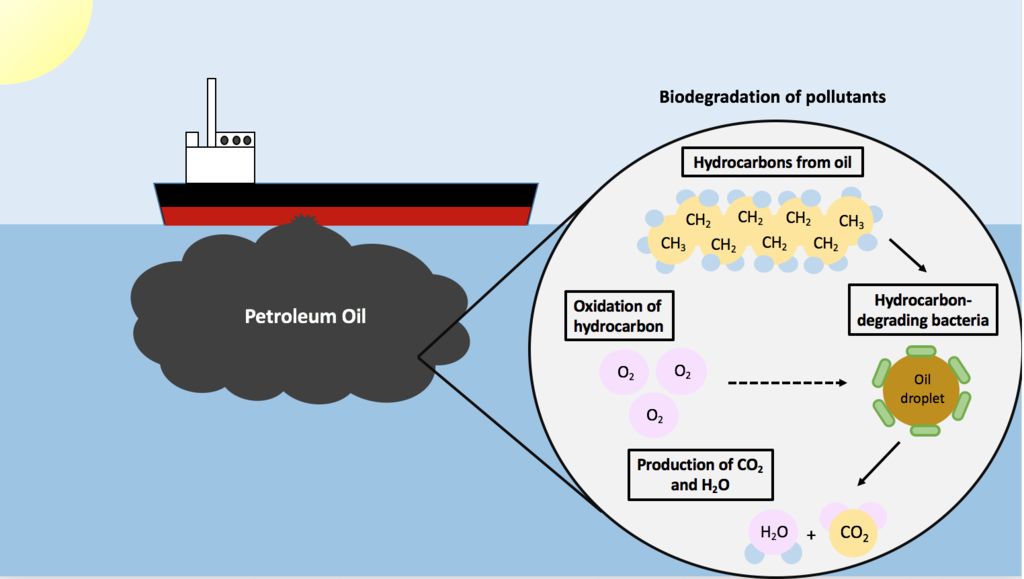Difference Between Biodegradation and Bioremediation