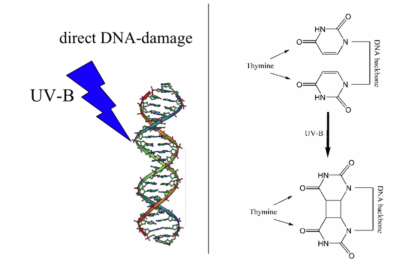 Key Difference - DNA Damage vs Mutation