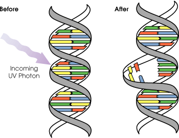Difference Between DNA Damage and Mutation