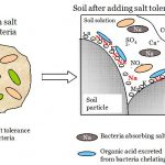 Difference Between In Situ and Ex Situ Bioremediation
