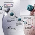 Difference Between Gene Therapy and Stem Cell Therapy