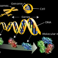 Difference Between Genomics and Proteomics