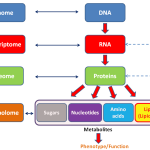 Difference Between Metabolomics and Metabonomics