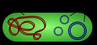 Key Difference - Plasmid vs Transposon