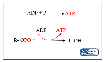 Key Difference - Substrate Level Phosphorylation vs Oxidative Phosphorylation