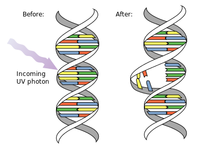 Difference Between Chromosomal Aberration and Gene Mutation