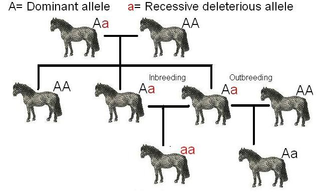 Difference Between Inbreeding and Outbreeding