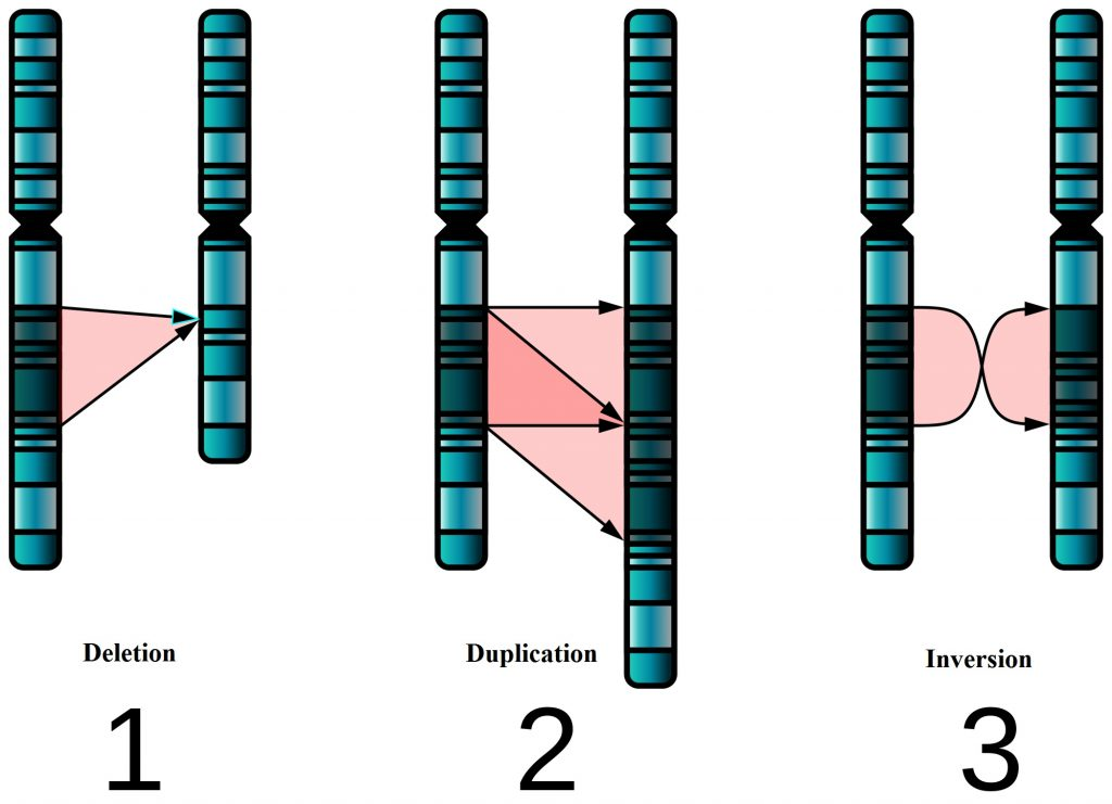 Difference Between Mendelian and Chromosomal Disorders