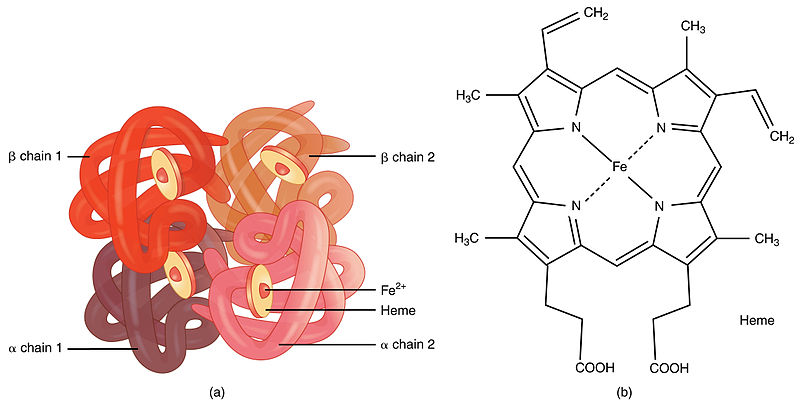 Difference Between Prosthetic Group and Coenzyme