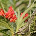 Difference Between Epiphytes and Parasites
