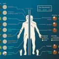 Difference Between Microbiome and Microbiota