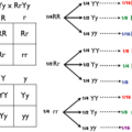 Difference Between Monohybrid and Dihybrid Crosses