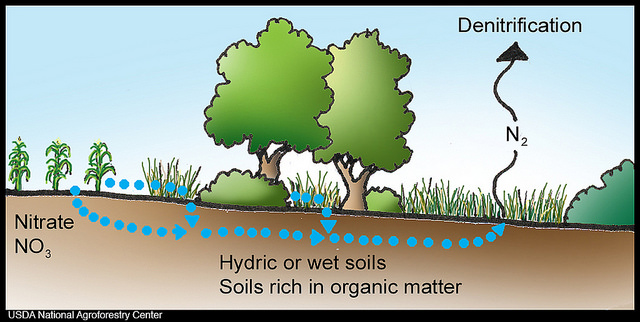 Key Difference - Nitrification vs Denitrification