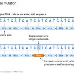 Difference Between Original and Mutated Sequences