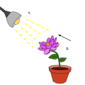 Difference Between Plant Hormones and Plant Growth Regulators