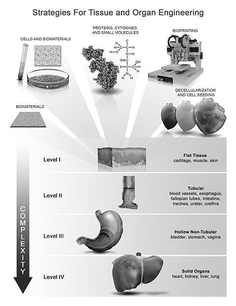 Key Difference - Tissue Engineering vs Regenerative Medicine