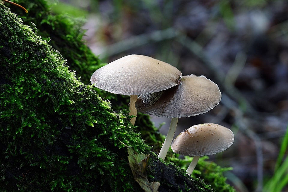 Difference Between Actinomycetes and Fungi