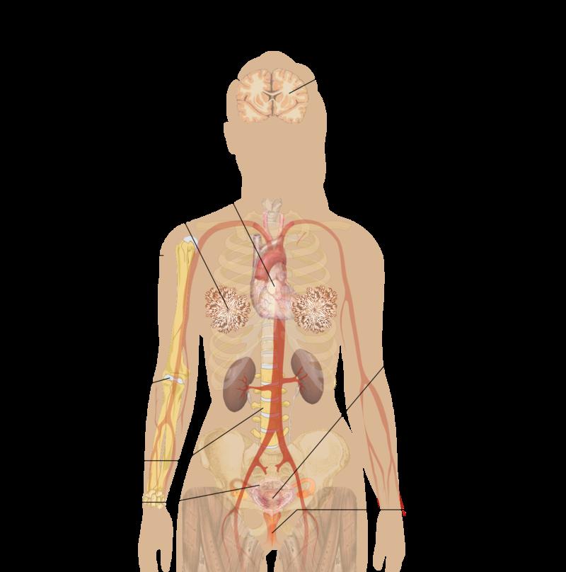 Key Difference - Amenorrhea vs Menopause
