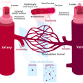 Difference Between Arteries and Arterioles