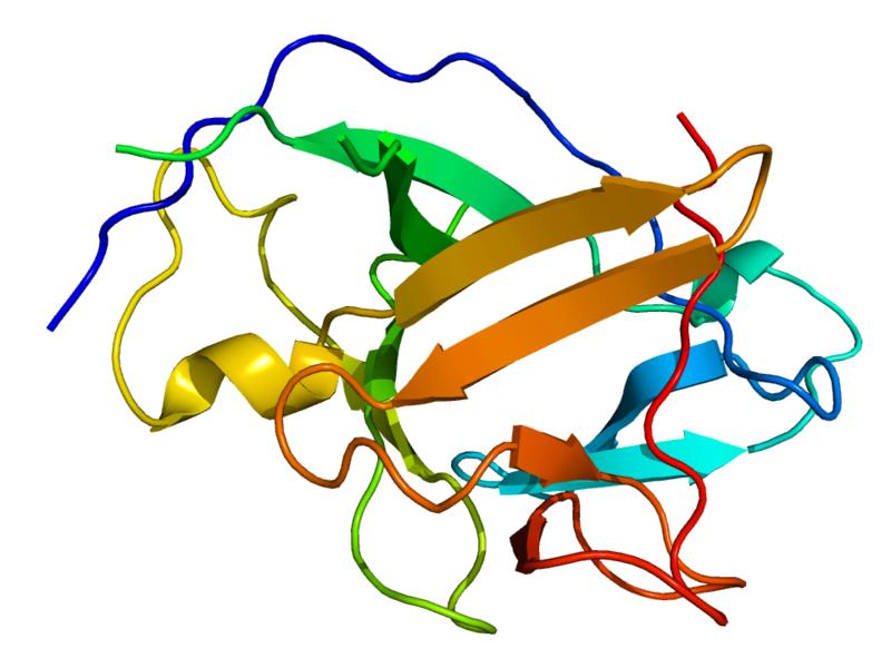 Key Difference - Endotoxin vs Pyrogen