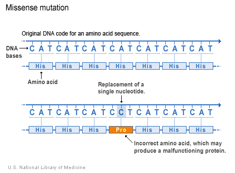 Difference Between Missense and Nonsense Mutation