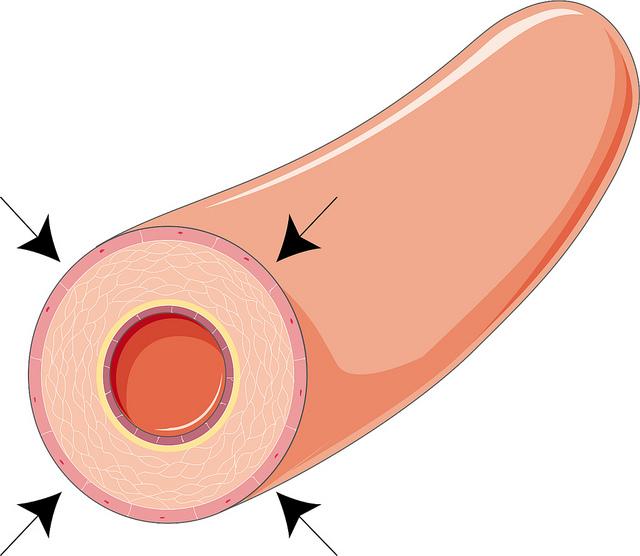 Key Difference - Vasoconstriction vs Vasodilation
