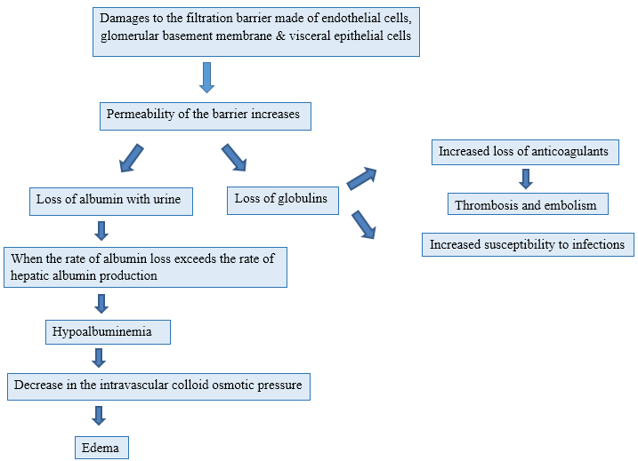 Difference Between Glomerulonephritis and Nephrotic Syndrome - 3