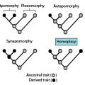 Difference Between Homoplasy and Homology