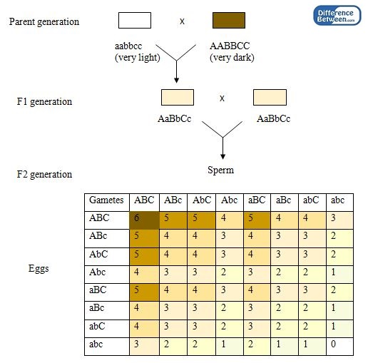 Difference Between Monogenic and Polygenic Inheritance