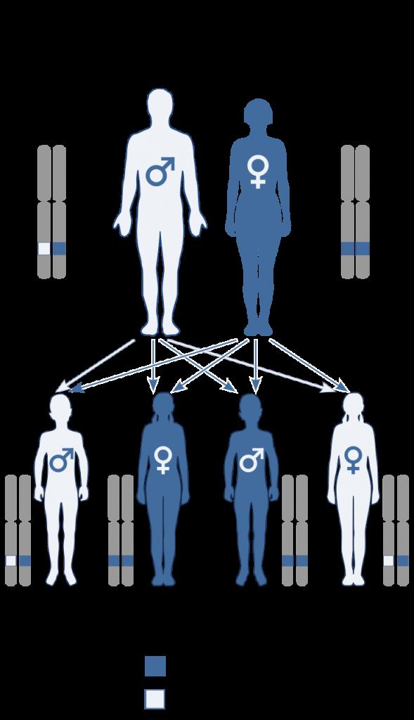 Key Difference - Monogenic vs Polygenic Inheritance