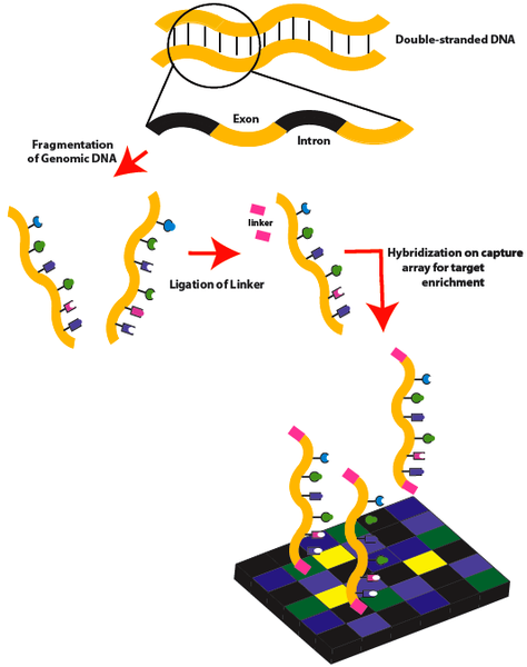 Difference Between Exome and RNA Sequencing