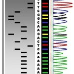 Difference Between Gene Sequencing and DNA Fingerprinting