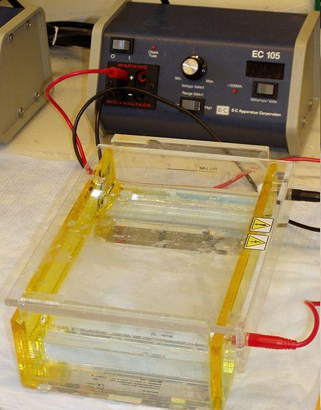 Key Difference - Horizontal vs Vertical Gel Electrophoresis