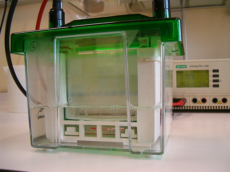 Difference Between Horizontal and Vertical Gel Electrophoresis