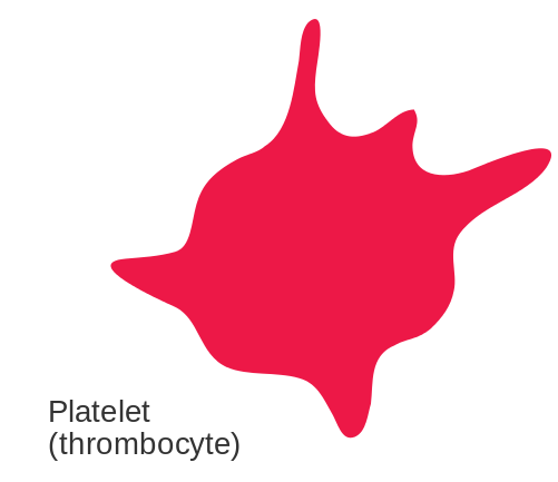 Key Difference - Megakaryocyte vs Platelet