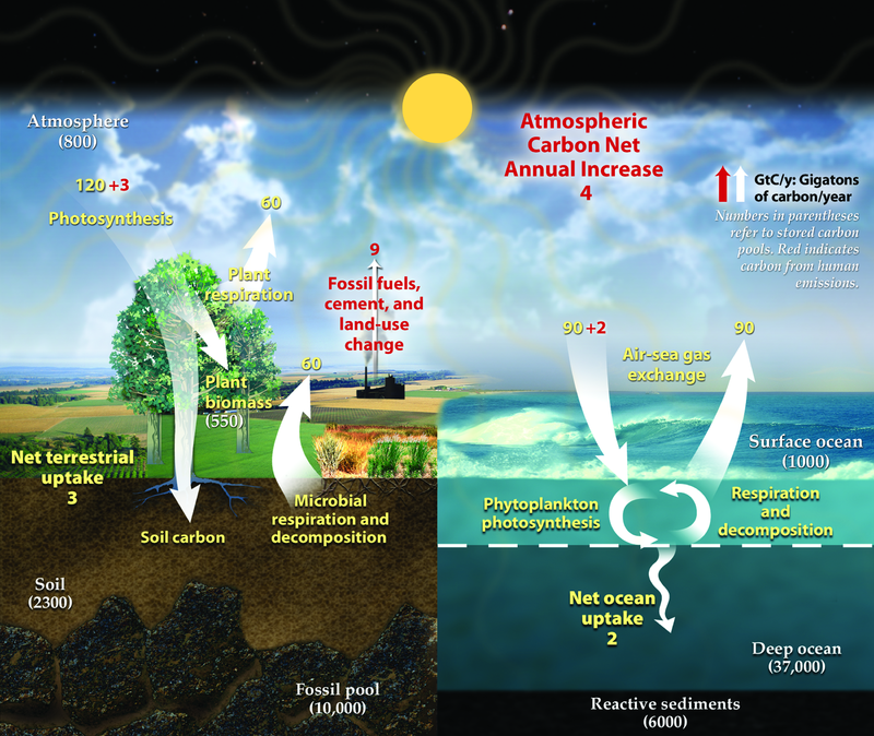 Difference Between Anthropogenic and Natural Climate Change