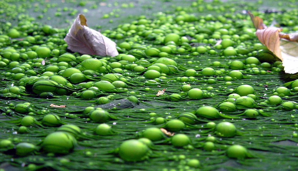 Difference Between Eutrophication and Biological Magnification