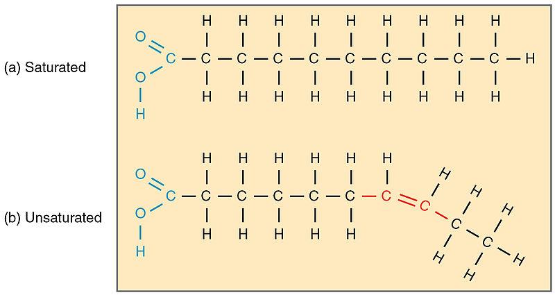 Key Difference -Glycerol vs Fatty Acids