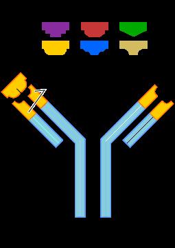 Difference Between Hapten and Antigen