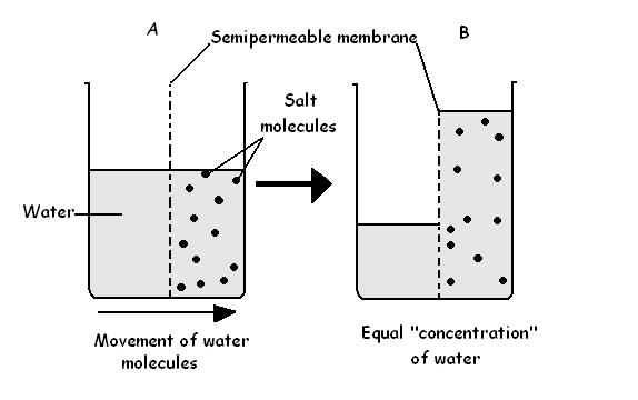 Difference Between Osmosis and Diffusion in Biology